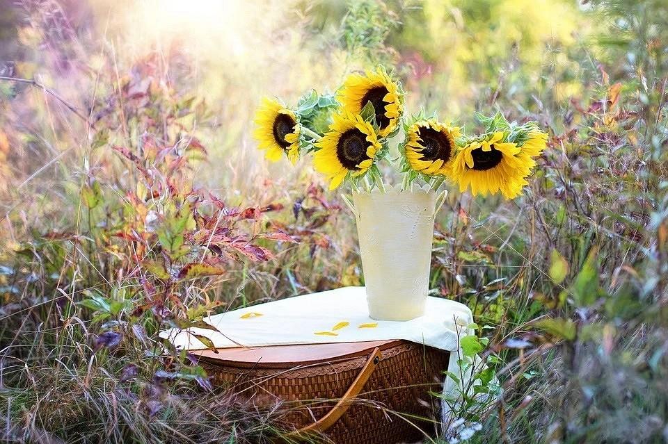 7 интересных фактов о цветах, которые знают только садоводы (проверьте себя!)