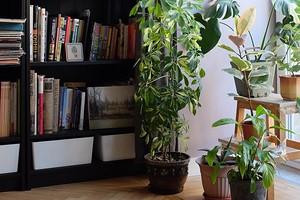 Как создать цветущий сад в доме, в котором очень мало света: 6 лайфхаков