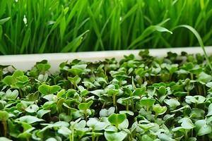 Что можно посадить в мае: 7 видов овощей и 6 цветов