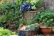 Что и как высадить на овощную клумбу: 7 идей полезного и необычного оформления грядок