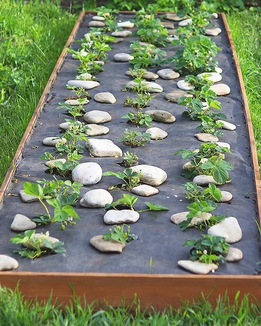 4 важных вещи, которые стоит делать в засушливое лето с сухой почвой (важно знать садоводам!)