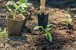 Топ-7 популярных ошибок начинающего огородника (и как их не допустить)