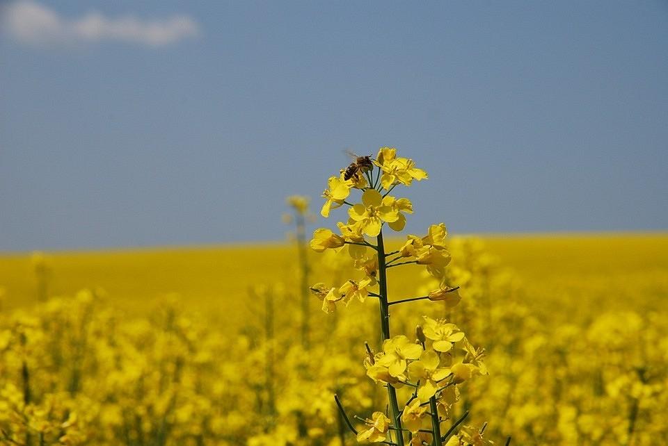 8 растений, из которых можно сделать удобрения (и сэкономить!)