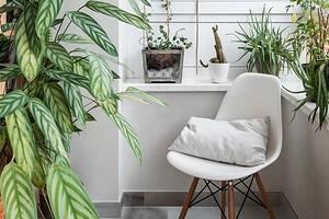 Зимний сад, кабинет или место отдыха: 8 уютных и функциональных балконов, которые оформили дизайнеры