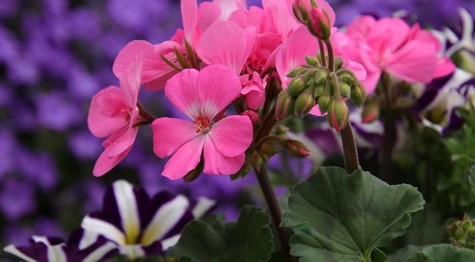 7 подходящих растений для заболоченной почвы (вырастут там, где вы и не надеялись!)