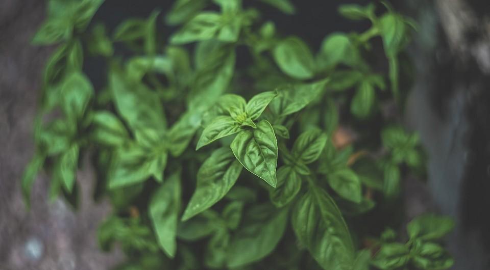 10 растений для дачи, с которыми вы больше не вспомните о вредителях на вашем участке