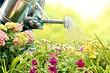 Когда лучше поливать разные виды растений: идеальное время для 8 популярных культур