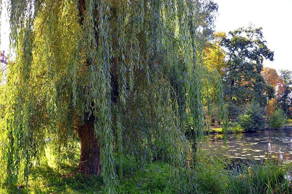 10 растений для дачи, которые перенесут следующую зиму