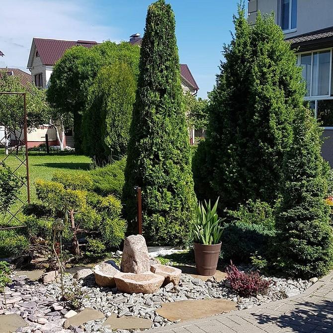 Виды и сорта хвойников: лучшие для ландшафтного дизайна в саду на даче