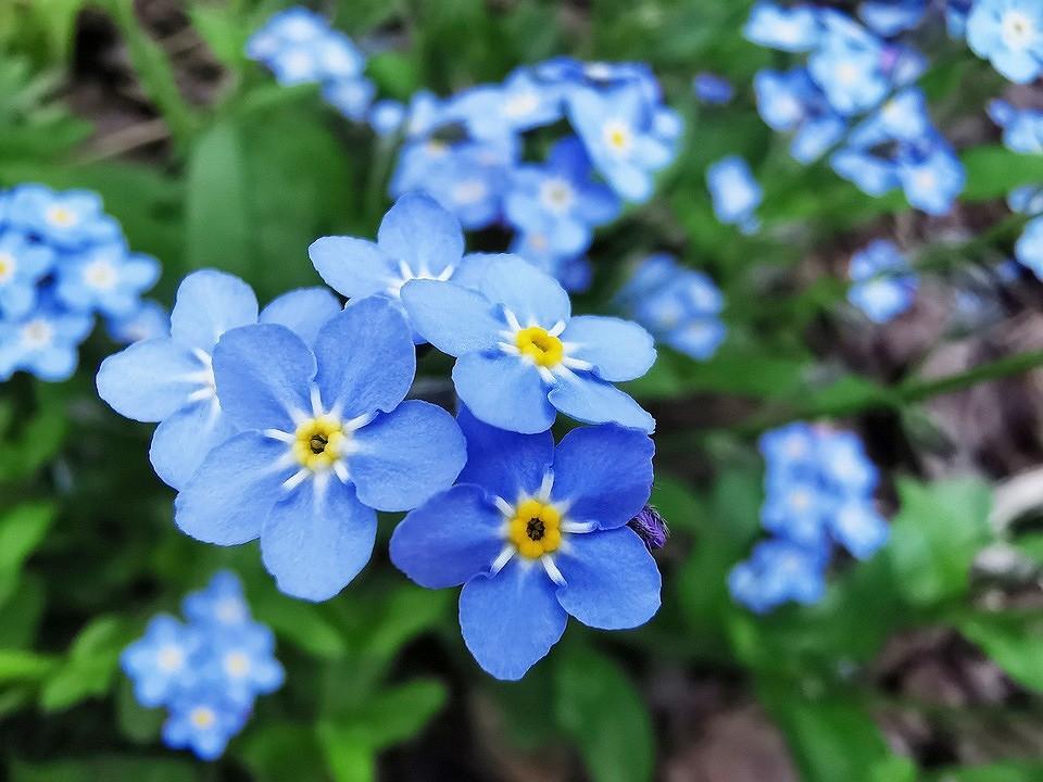 Клумба для ленивых: 9 садовых растений, которые цветут сами по себе