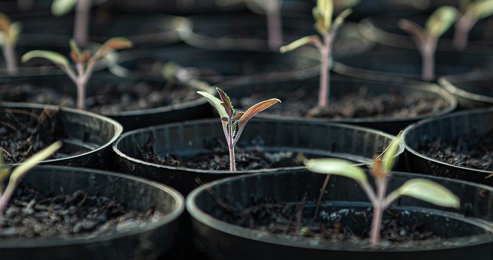 6 законных способов достать саженцы для сада бесплатно