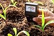 Как раскислить почву на огороде: 5 эффективных методик