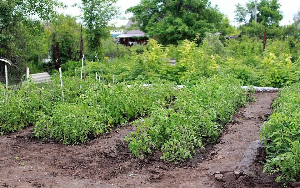 Как предотвратить появление сорняков на участке: 7 способов облегчить себе жизнь