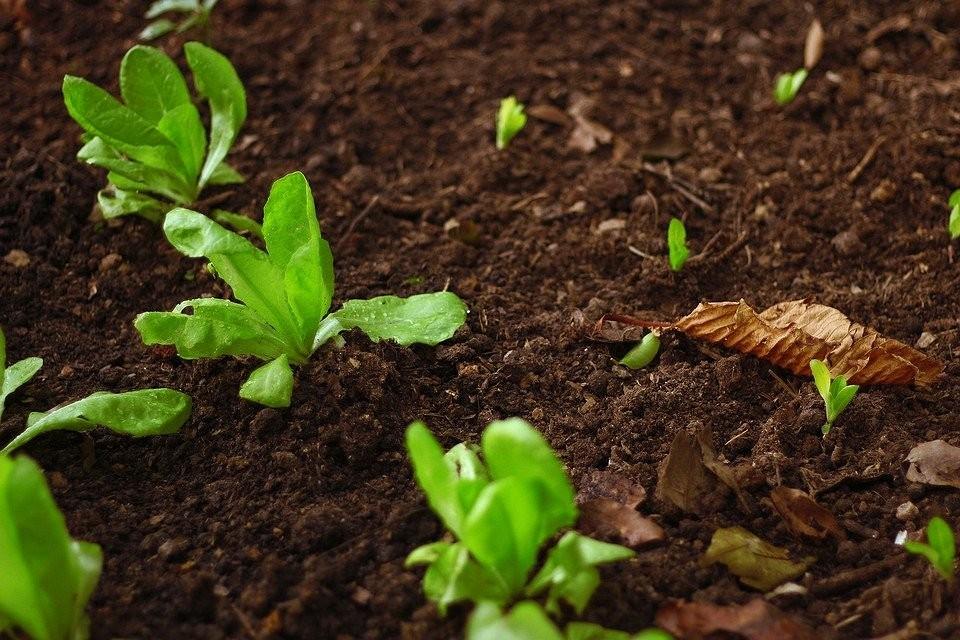 8 популярных ошибок при работе с удобрениями для сада