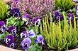 Как оформить клумбы с хвойниками и цветами