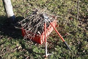 Как правильно обрезать дерево: подробный гид для начинающих садоводов