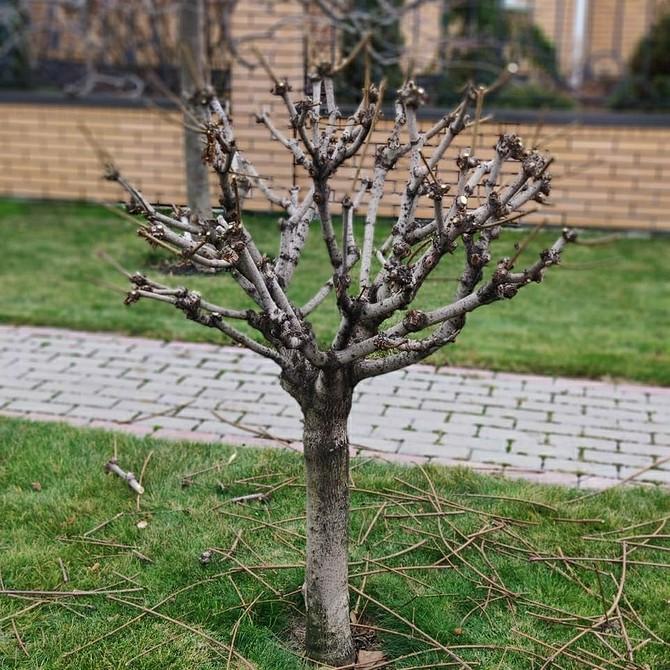 Как правильно обрезать дерево: когда и как проводить