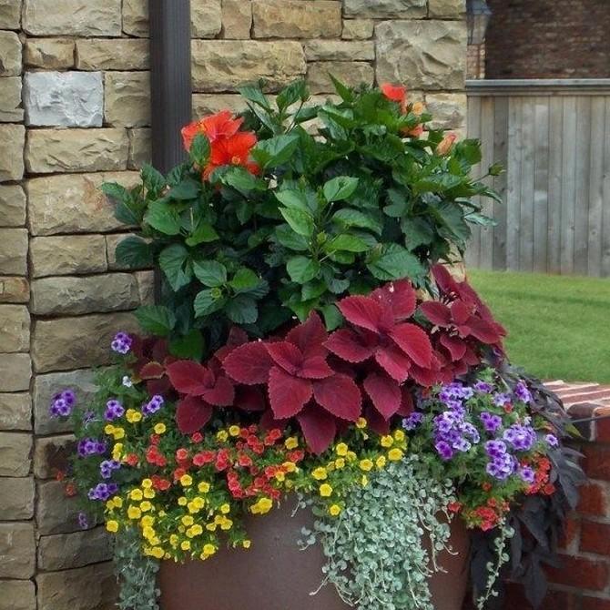 5 способов оформить сад цветами в контейнерах (во-первых, это просто)