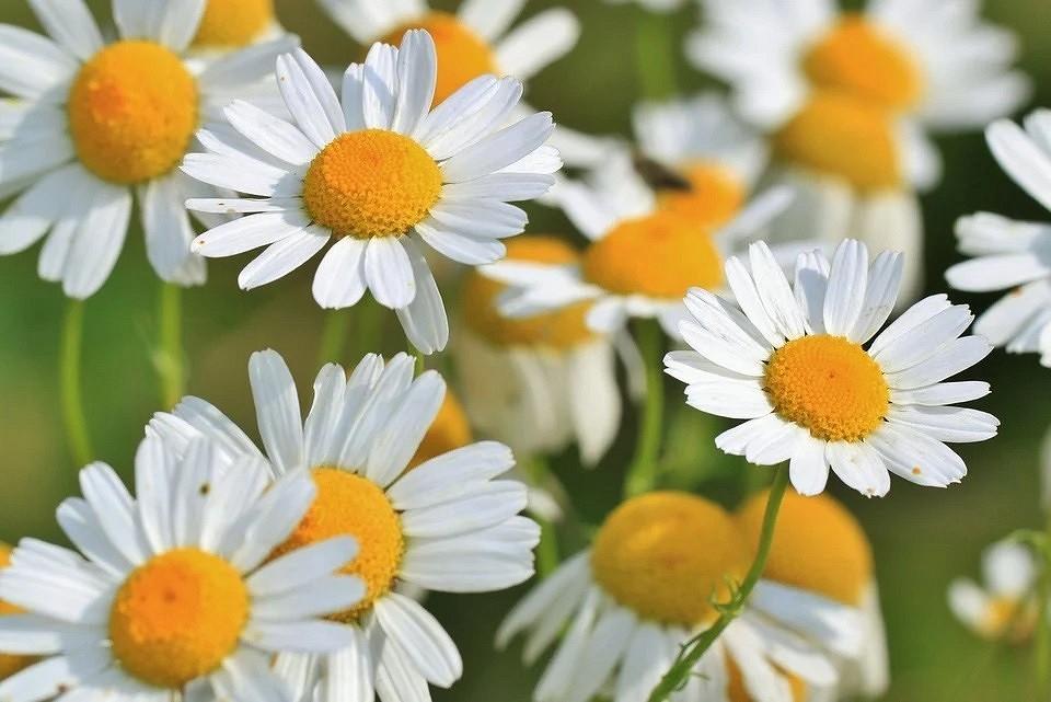 8 лекарственных растений в вашем саду, которые стоит засушить (и сэкономить на аптечке)