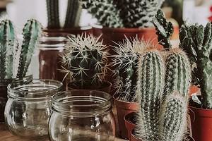 Как сохранить комнатные цветы на время отпуска (спойлер: вам не придется просить соседей)