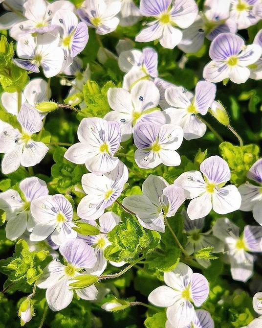 6 дикорастущих растений, которые можно посадить на своем участке (и сделать его красивее)