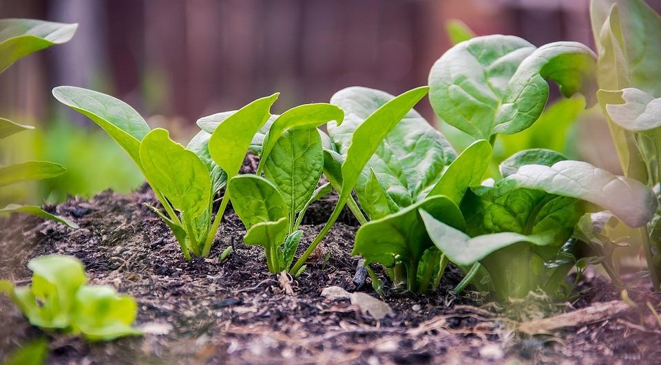 Что можно сажать в июле: посадка овощей, цветов и трав