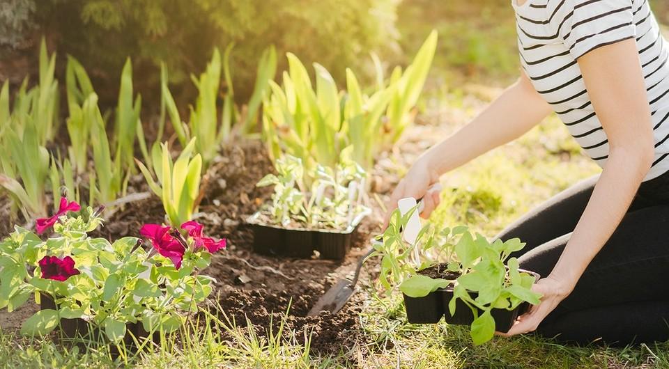 8 самых провальных идей в ландшафтном дизайне сада (лучше не повторять!)