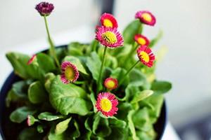 8 натуральных удобрений для комнатных цветов, которые есть на вашей кухне