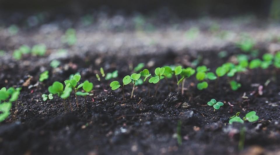 8 съедобных растений, которые еще не поздно посадить на участке