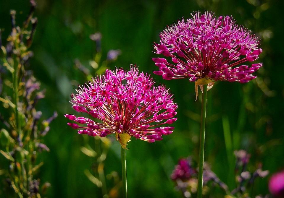 Красиво и полезно: 10 овощей, которые можно посадить, чтобы украсить грядку