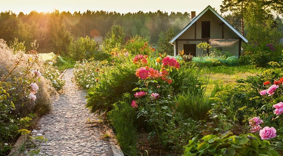 Можно ли сажать мак на своем участке: за какие цветы могут оштрафовать садовода