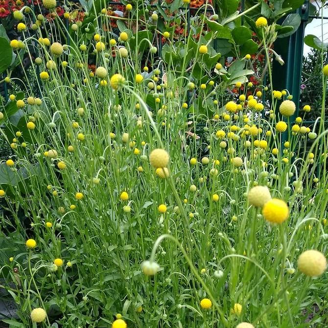 9 необычных растений для вашего участка, которые не растут у соседей