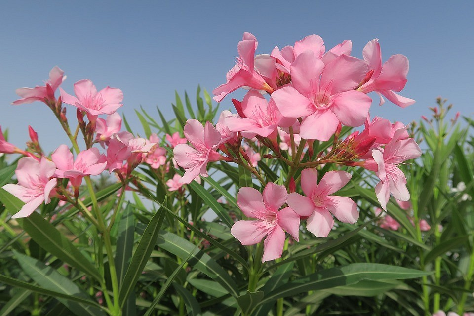 7 огнеопасных растений в вашем саду (будьте предельно осторожны!)