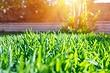 Зеленая лужайка у вас дома: выбираем газонную траву