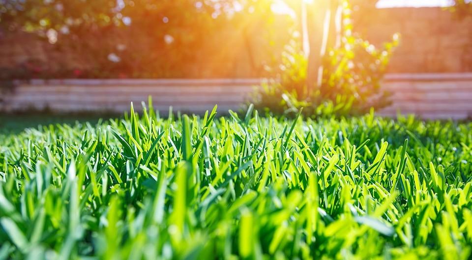 Выбираем лучшую газонную траву: фото, название, описание
