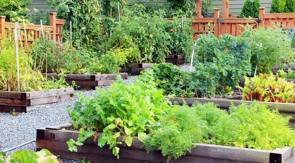 Как спланировать сад на следующий год (вам нужно подумать об этом уже сейчас!)