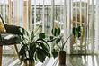 6 вещей, о которых стоит подумать, прежде чем принести в дом растение (это важно!)