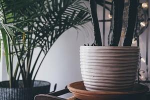 5 признаков того, что ваши растения чувствуют себя плохо (пора срочно принимать меры!)