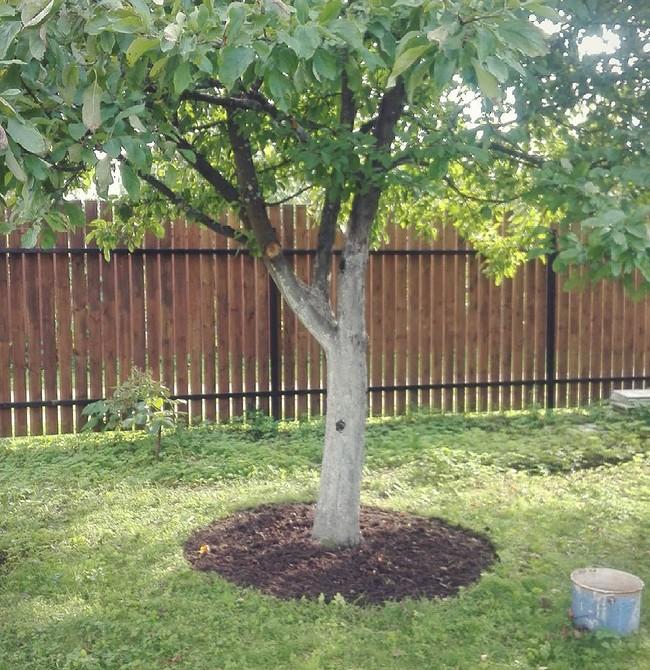 Оформление приствольных кругов деревьев: идеи дизайна