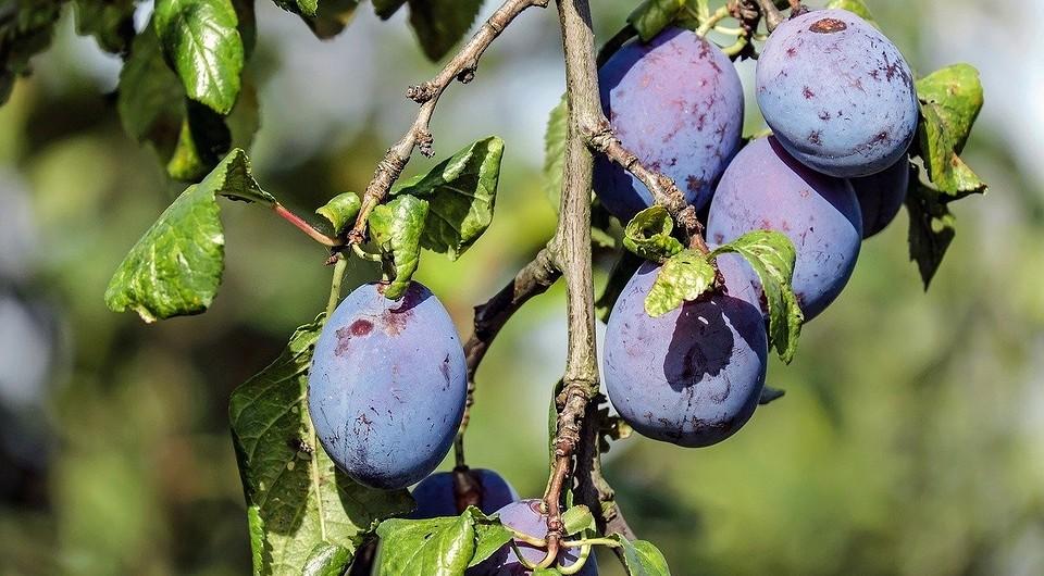 Что можно посадить в августе на огороде: какие культуры сажают в конце лета?