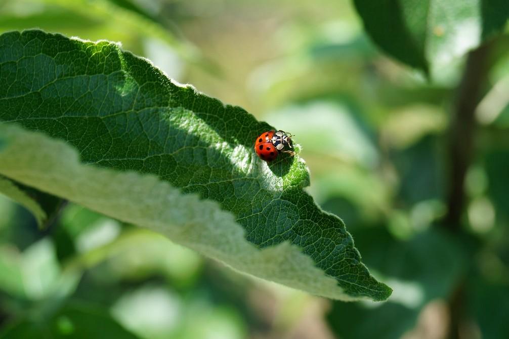 6 полезных насекомых для вашего сада (не спешите их прогонять!)
