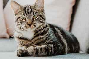 Как убрать запах кошачьей мочи с пола, ковра и обуви