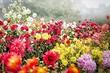 Какие цветы посадить осенью: 9 лучших растений