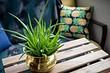 5 комнатных растений, которые выживут несмотря ни на что