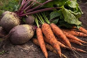 Подсказка для огородника: когда убирать морковь и свеклу с грядок