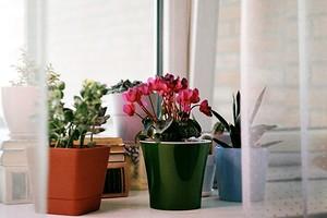 7 трендовых кашпо для маленьких и больших растений (50 фото)