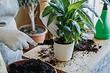 9 причин, которые провоцируют болезни растений после пересадки
