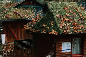 Из города в деревню: россияне рассказали, почему они хотели бы переехать в сельскую местность