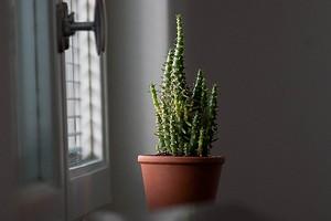 10 комнатных растений, которые требуют больше света в осенне-зимний период