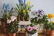 5 цветущих растений, которые стоит подарить на День святого Валентина (они лучше букета!)